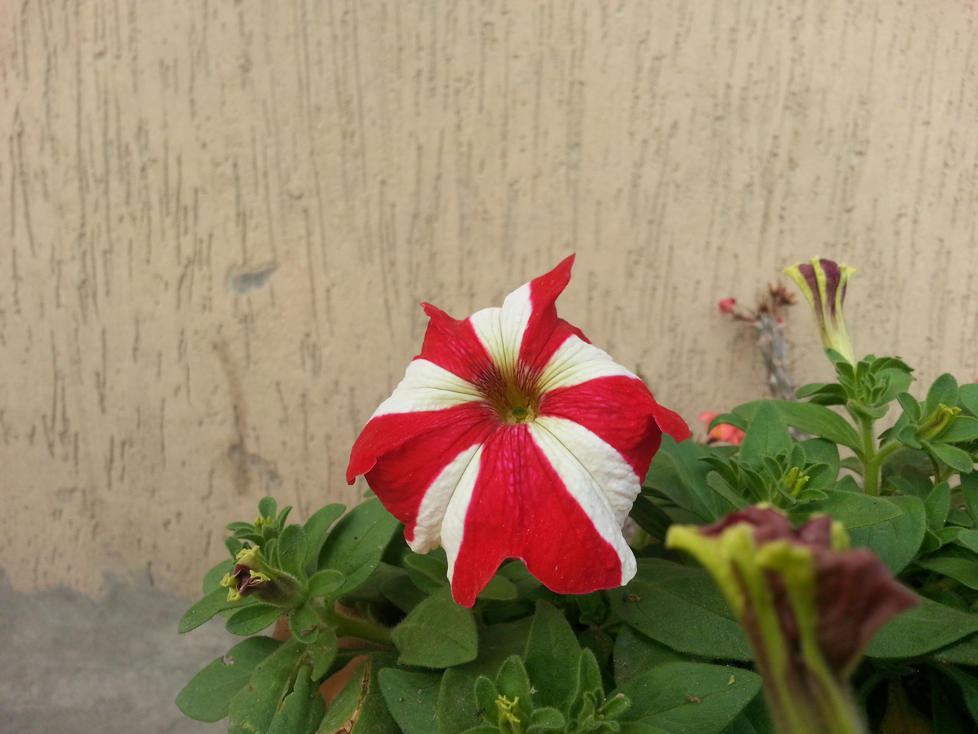 Lumia 920 vs Galaxy Note 2: Camera Comparison Sample Shots 13